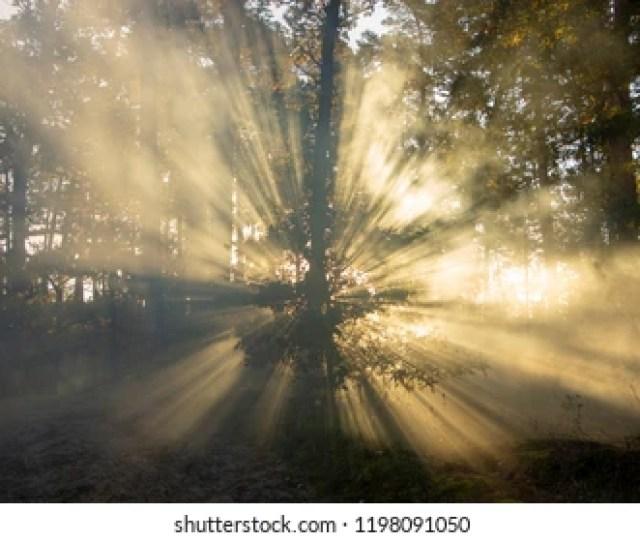 Beautiful Morning Scene Sun Rays Break Through The Branches Of Trees