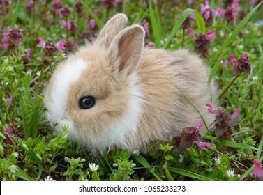 Baby Rabbit Images Stock Photos Vectors Shutterstock