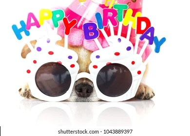Happy Birthday Dog Card Images Stock Photos Vectors Shutterstock