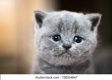 Do Cats Actually Love Their Owners Quora