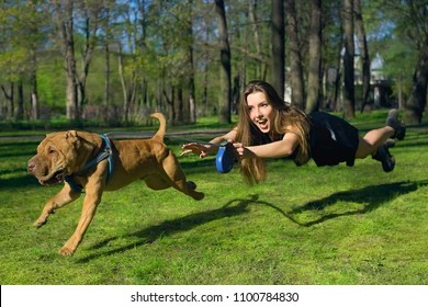 Owner getting dragged away with dog on leash. Dog is clearly chasing something. Bad leash behavior