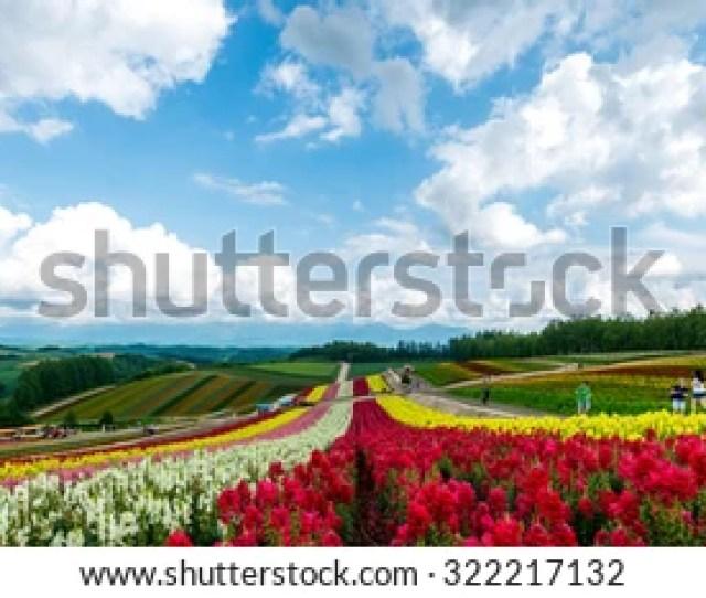 Fields Of Flowers Hokkaido Japan July 2015