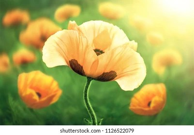 Nature Flowers Images Stock Photos Vectors Shutterstock