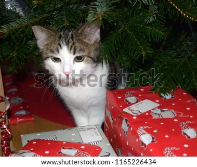 Funny Kitten And Gifts Under A Christmas Tree