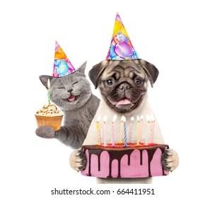 Dog Cat Birthday Images Stock Photos Vectors Shutterstock