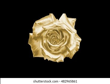 Gold Flowers Images  Stock Photos   Vectors   Shutterstock Gold flower on a black background