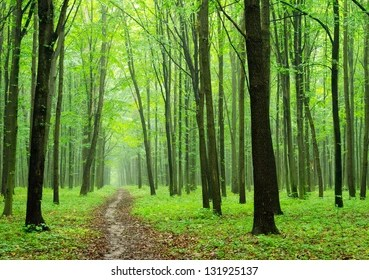 Forest Background Images Stock Photos Vectors Shutterstock
