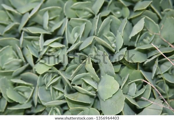green succulent plants up close