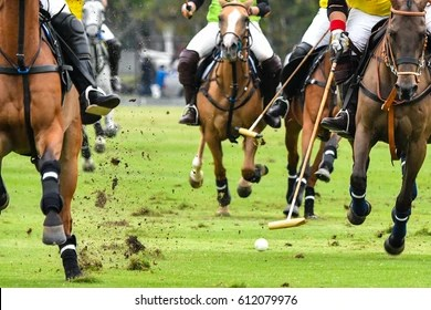 Polo Horse Images  Stock Photos   Vectors   Shutterstock Horses Polo Run In The Game