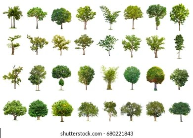 https www shutterstock com image photo isolated trees on white background collection 680221843