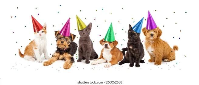 Dog Cat Happy Birthday Images Stock Photos Vectors Shutterstock