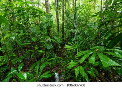 Indonesian Rainforest High Res Stock Images Shutterstock