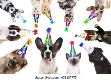 Funny Birthday Animal Images Stock Photos Vectors Shutterstock