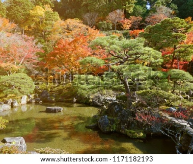 Natural Background And Wallpaper Of Beautiful Zen Garden With Pine Tree Colorful And Vibrant Autumn
