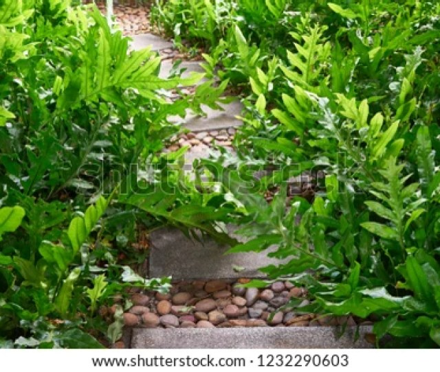 Nature Background And Wallpaper Of Beautiful Small Garden With Stone Plate Pathway With Small Round Rock