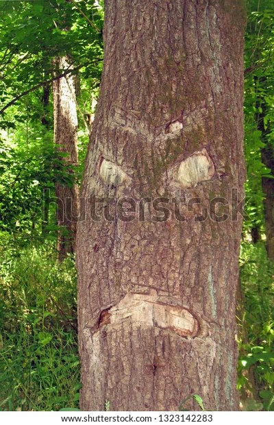 scared tree looks like it is angry