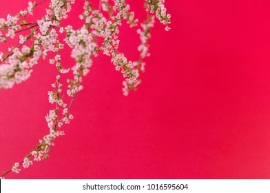 Partial Focus Images Stock Photos Vectors Shutterstock