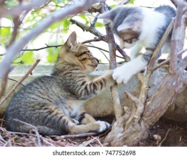 Two Kittens Are Playing Together In A Lovely Flower Pot