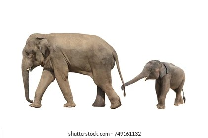 Elephant Images Stock Photos Vectors Shutterstock