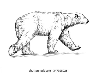 Polar Bear Line Drawing Images Stock Photos Vectors Shutterstock