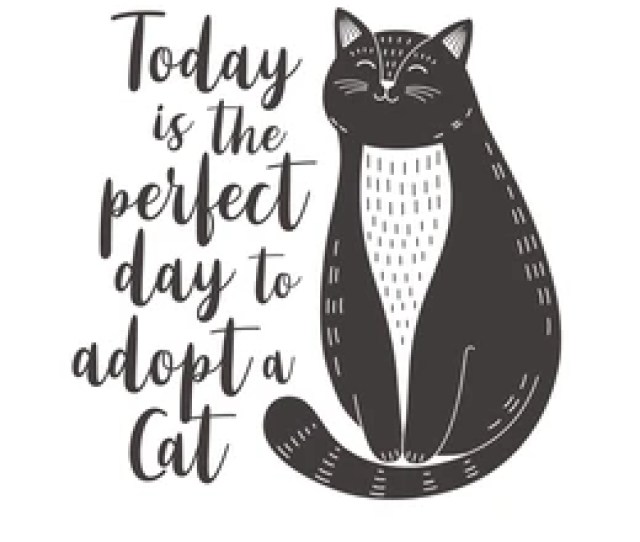 Cat Adoption Poster Cute Black And White Cat With Quote Today Is The Perfect Day