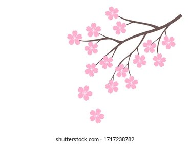 Fleur De Cerisier Dessin Hd Stock Images Shutterstock