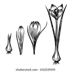 https www shutterstock com fr image vector flower plant growth concept vector design 1922539595
