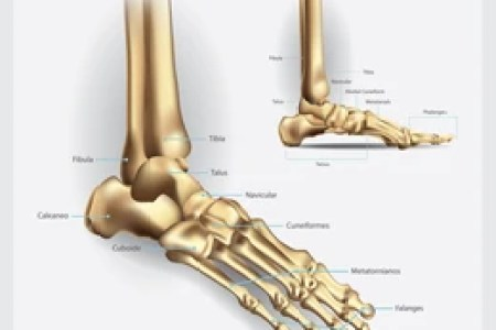 Parts Of Foot Bones Full Hd Pictures 4k Ultra Full Wallpapers