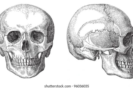 Interior Skull Structures Electronic Wallpaper Electronic Wallpaper