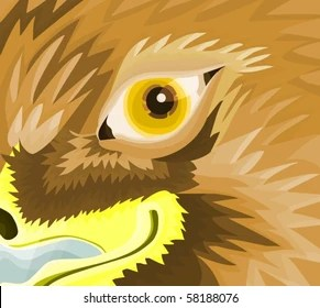 Picture Of A Eagle Eye
