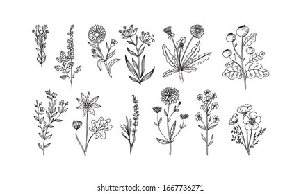 Drawing Flowers Images Stock Photos Vectors Shutterstock