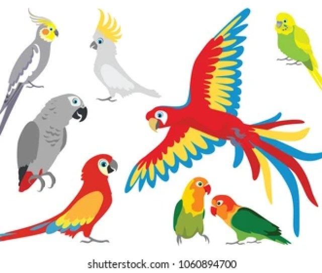 Set Of Vector Cartoon Colorful Parrots In Different Poses Jaco Cockatoos Wavy Parrot