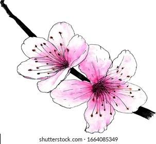 Dessin Cerisier Japonais Images Photos Et Images Vectorielles De Stock Shutterstock