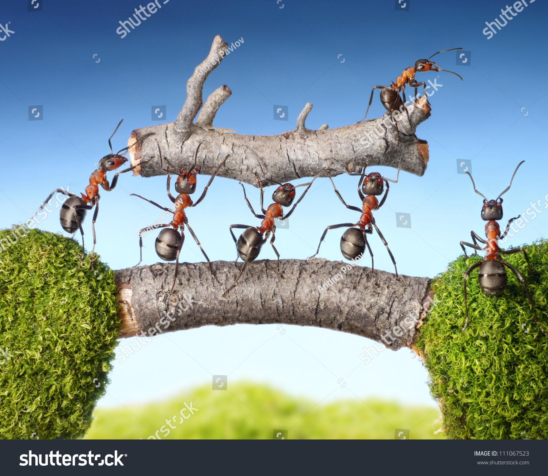 Ants On A Log Story