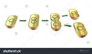Binary Fission Bacteria 3d Illustration On Stock Illustration 711055639  Shutterstock