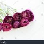 Bouquet Dark Burgundy Ranunculus Flowers On Stock Photo Edit Now 604012241