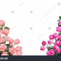 rose flower corner border design gardening flower and vegetables