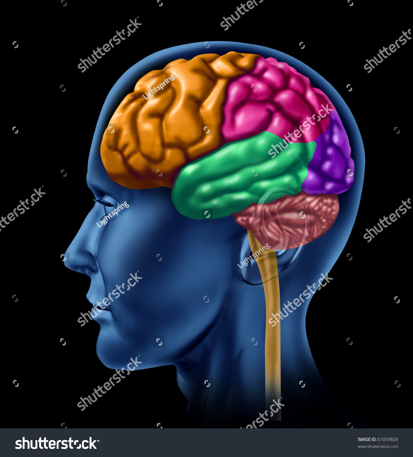 Brain Lobe Sections Divisions Of Mental Neurological Lobes
