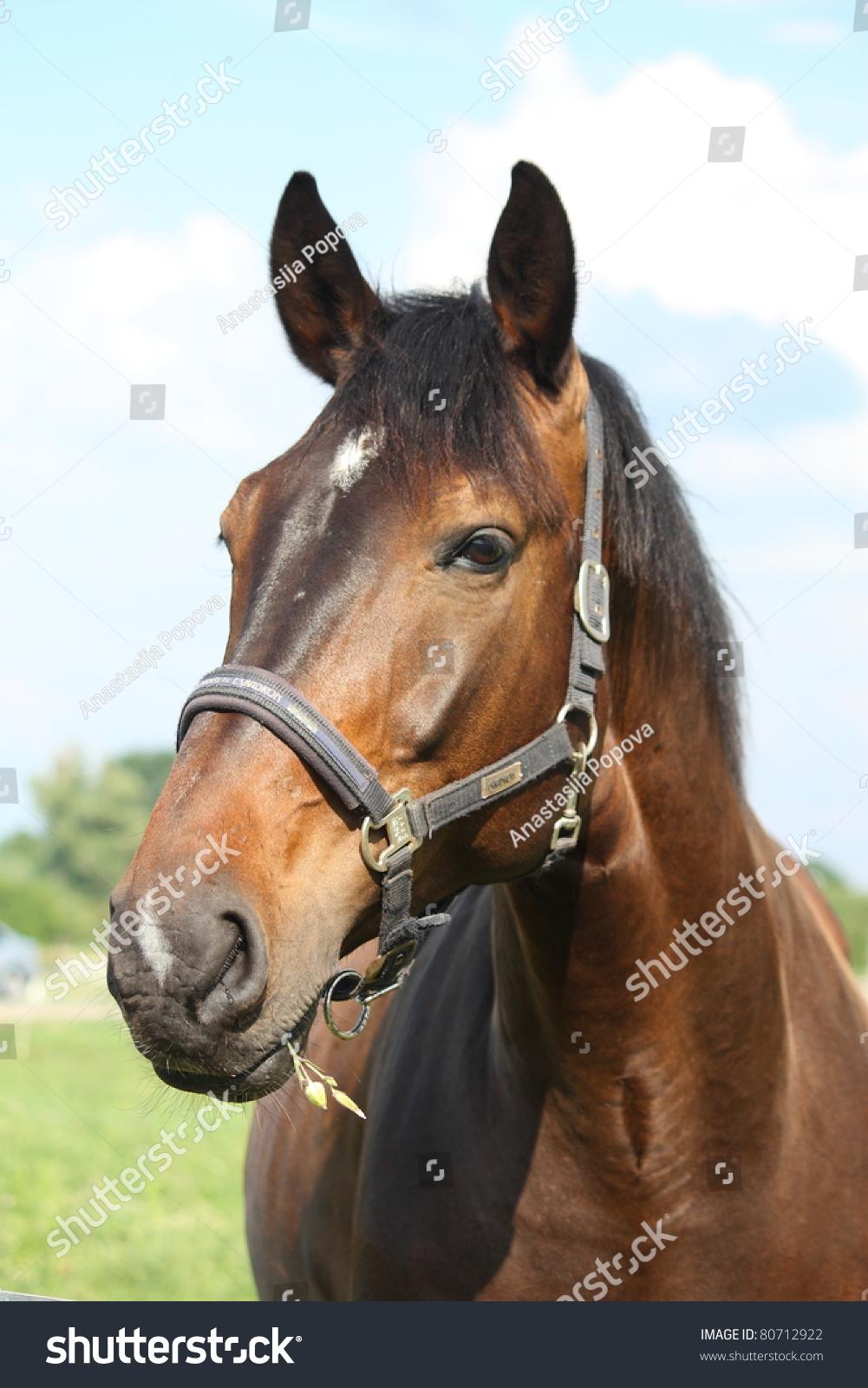 Black Horse Mane White Star