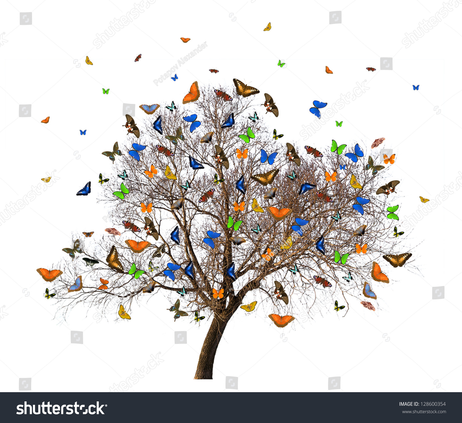 Butterflies And Tree Without Leaves Isolated On White