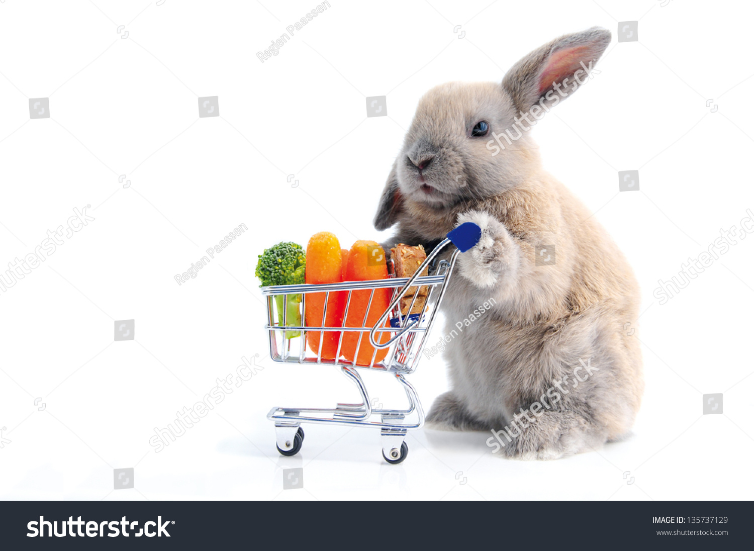 Cute Bunny Shopping For His Favorite Snacks With Shopping