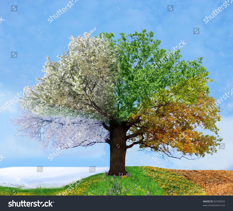 Four Season Tree Stock Photo