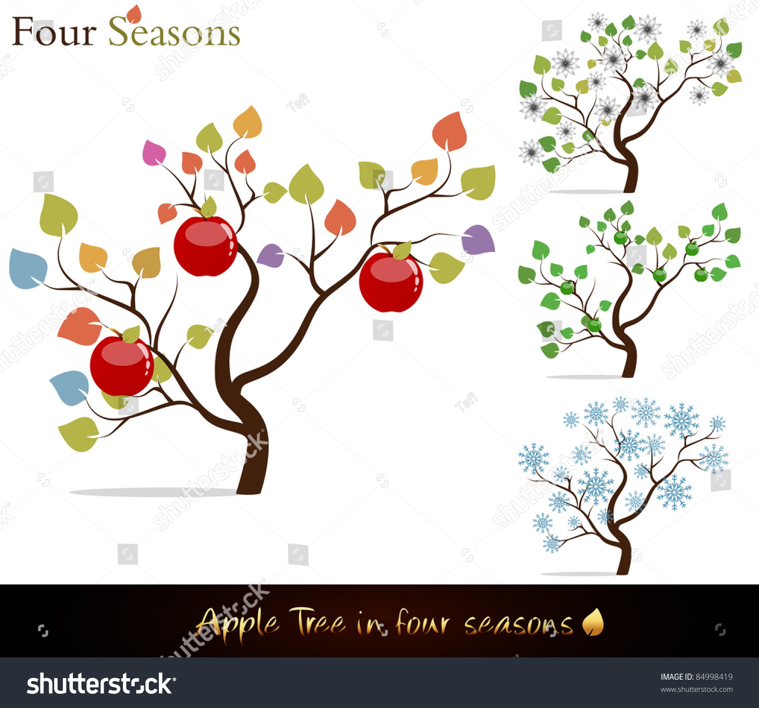 Four Seasons Colorful Apple Tree With Delicious Red