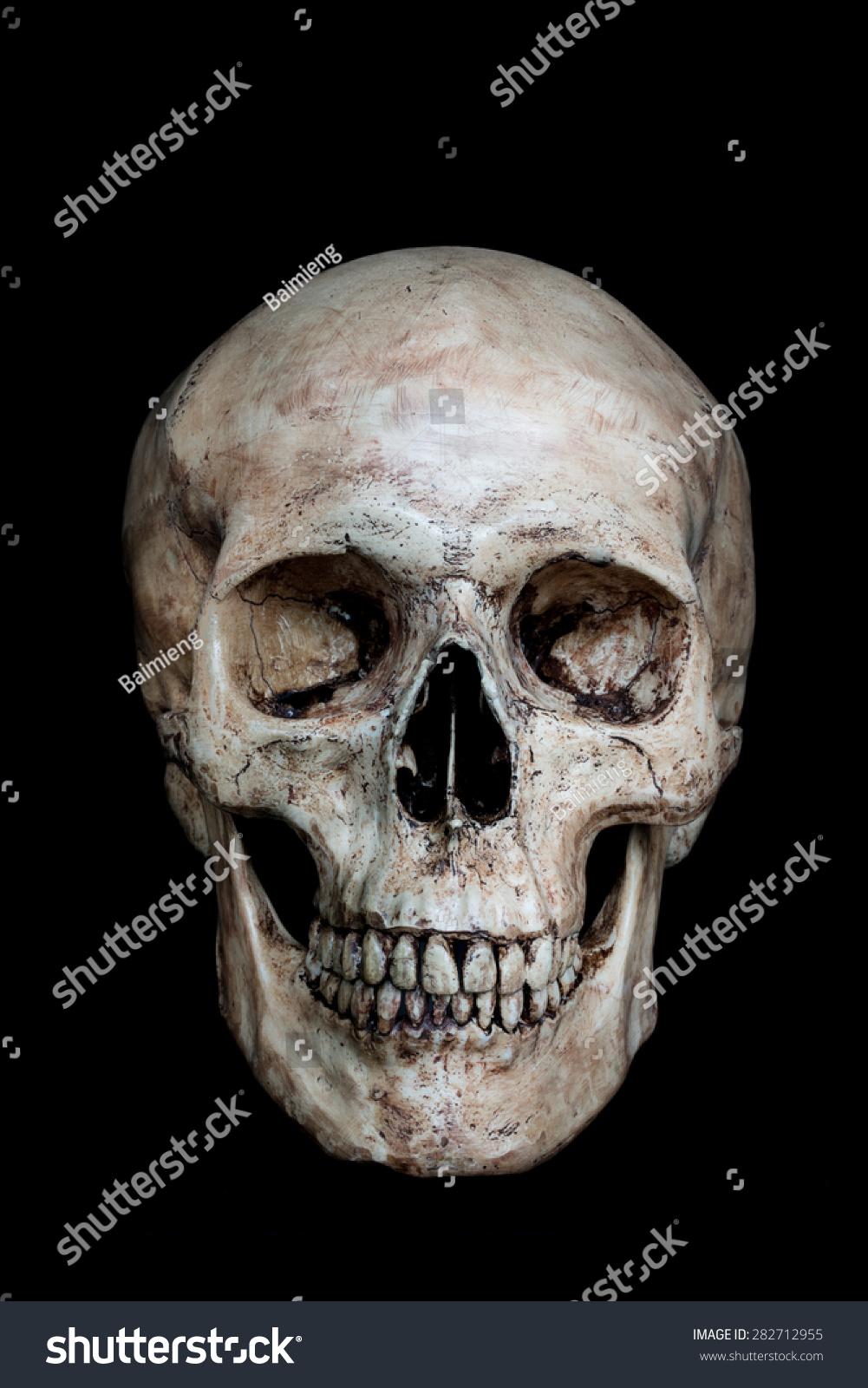 Human Skull Front View Hd