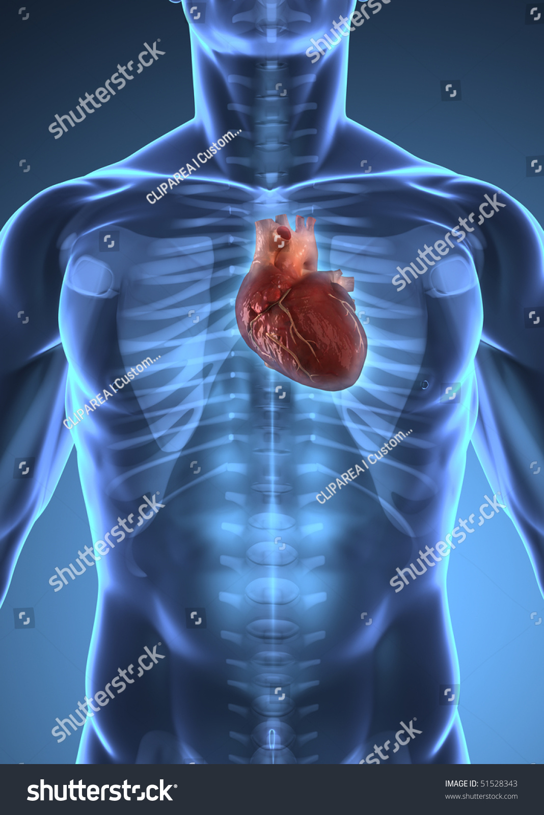 Heart inside body diagram auto electrical wiring diagram heart inside body diagram block and schematic diagrams u2022 rh wiringdiagramnet today inside the heart with a diagram of oxygen inside the heart with a ccuart Images