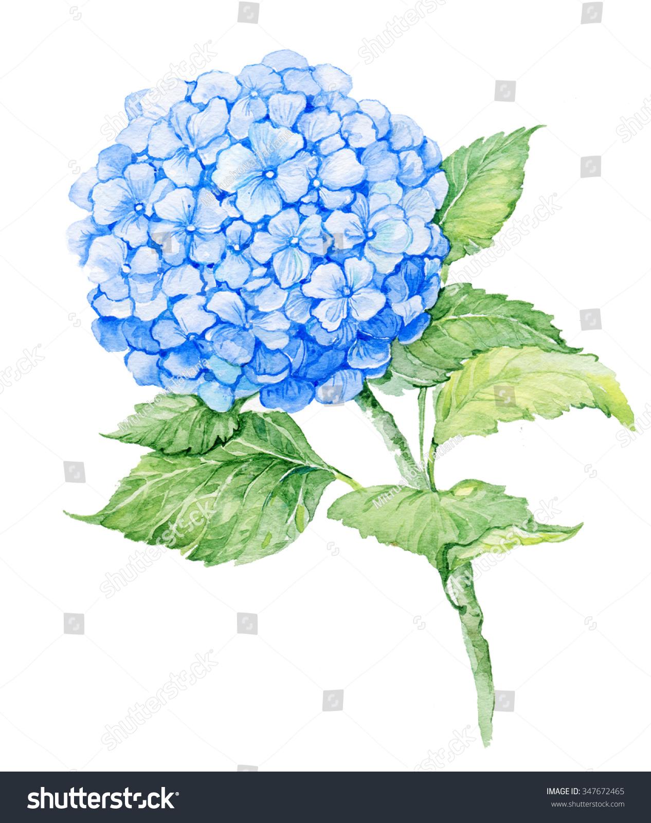 Hydrangea paper flower template selol ink hydrangea paper flower template mightylinksfo