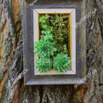 Indoor Outdoor Modern Vertical Succulent Wall Stock Photo Edit Now 511661773