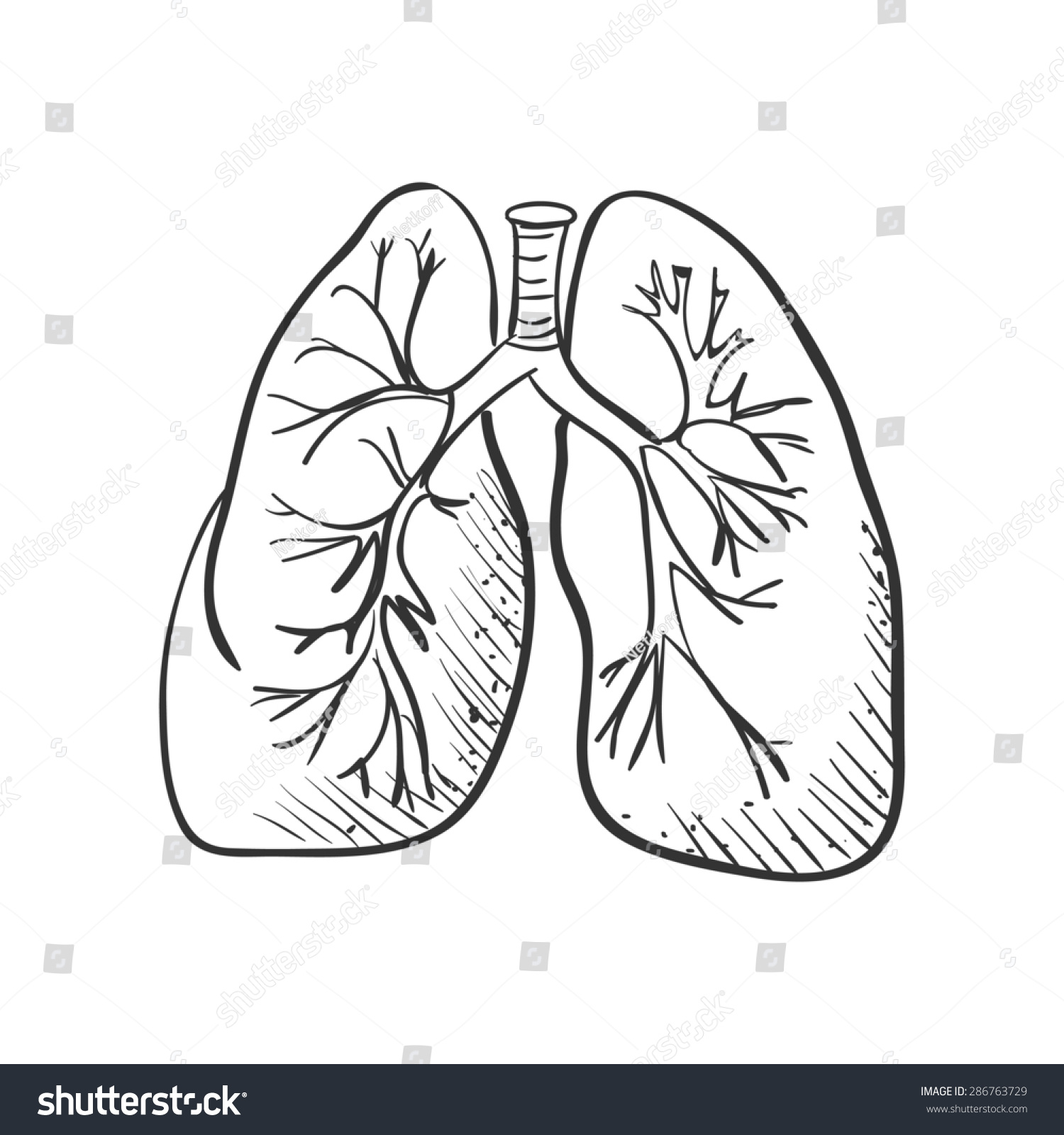 Lungs Doodle Drawing Medical Background Stock Illustration