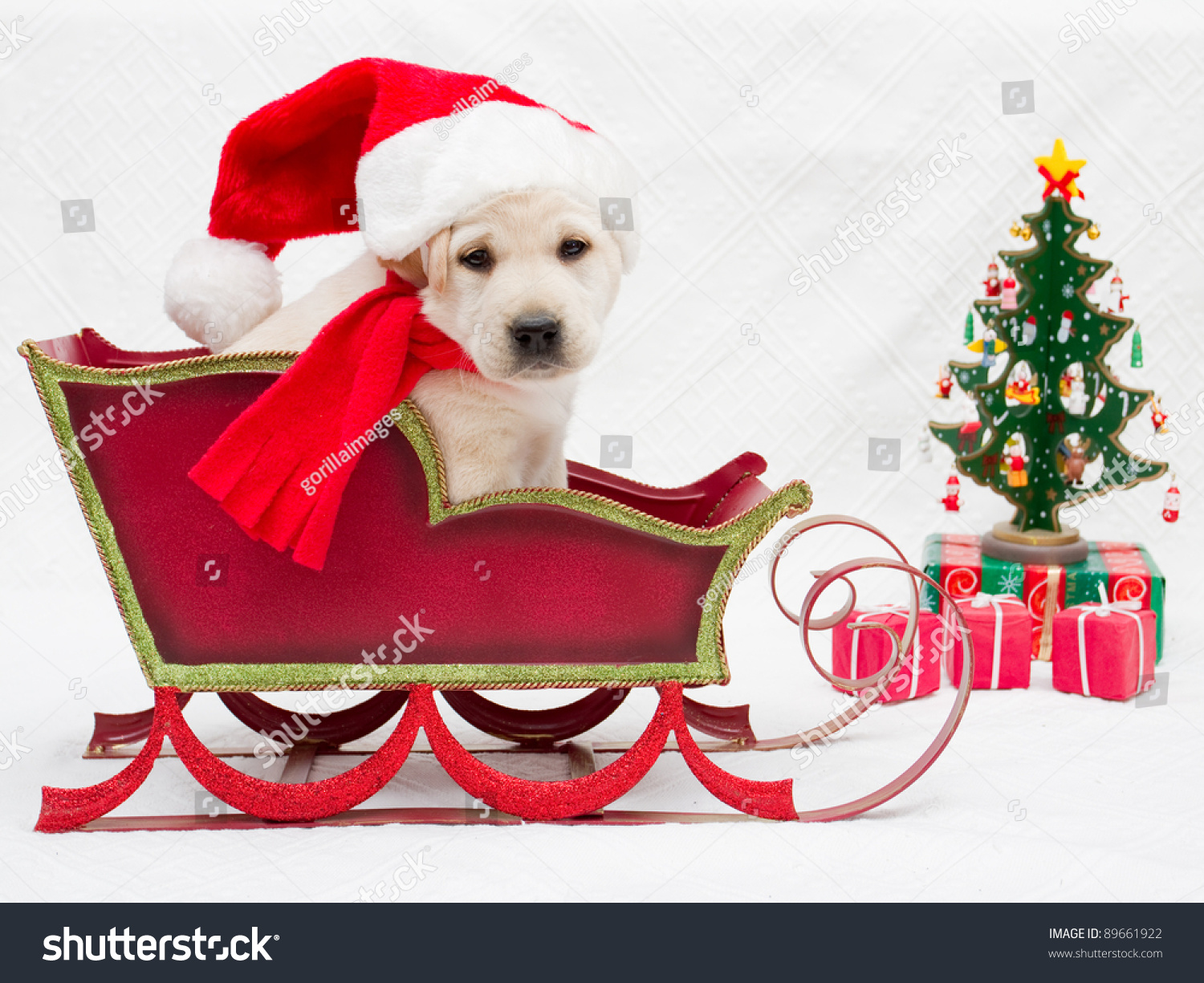 Merry Christmas Portrait Cute Labrador Puppy Stock Photo