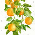 Ilustracoes Stock Imagens E Vetores De Oranges On Branch Watercolor Painting Illustration 287813426